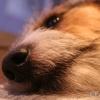 FR08/3 - EM (Hunde) Studien