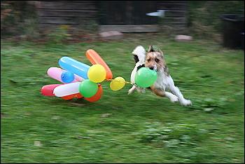 Luftballonspielerei1