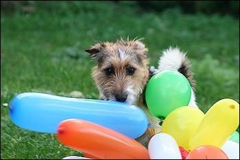 Luftballonspielerei2