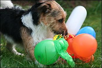 Luftballonspielerei3