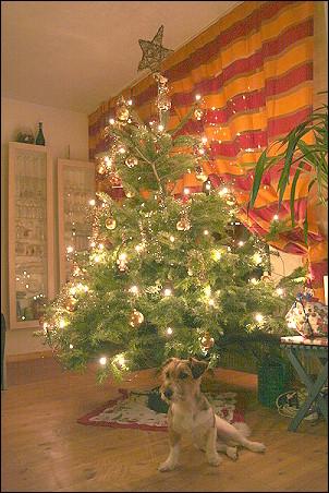weihnachtsbaum-luca 021