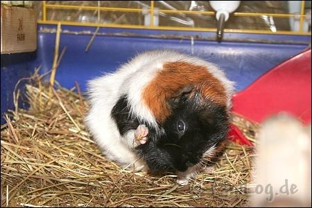 schweine-28-10-07 005