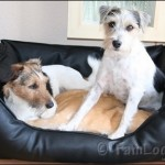 Hunde-Couch