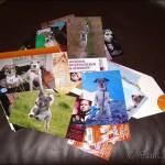 picabee-Fotos