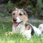 Garten-Hunde