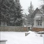 Mein Januar 2010
