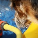Sommerhunde-Blogparade