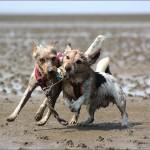 Hunde-Stöckchen
