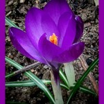 powerful violet {color me happy 3/2013}