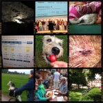 Week-in-PIX-2013 #26
