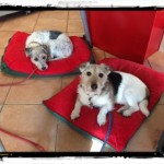 Business Körbchen für Bürohunde