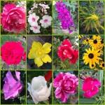 Gartenblumen 2014