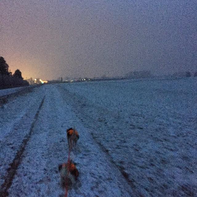 Es schnieselt  #wetter #aufdemwegindenladen