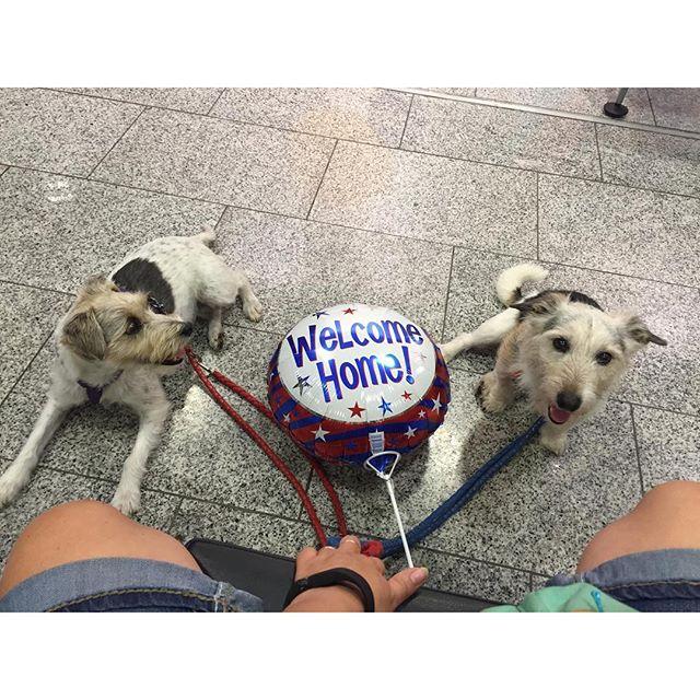 Wir warten auf Maren ️ #LuRos #welcomehome #backfromcanada #maren #dogstagram #pmdoggyday2015