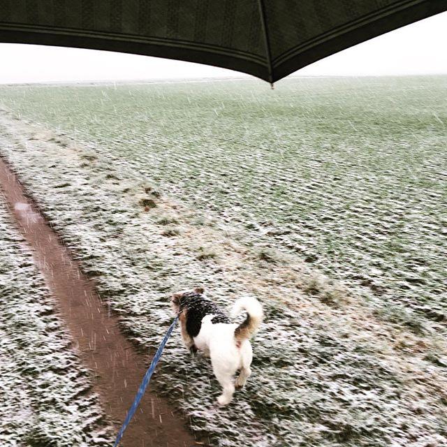 Es schnegnet. #wasnwetter #schneeregen #lucaundichallein #missrosieundihrchauffeur