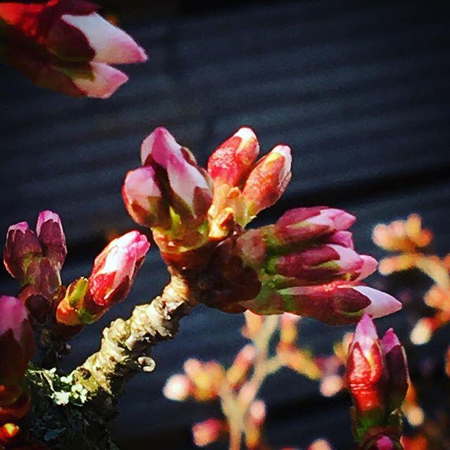 Frühling ️ #Wetter #frühling #blümchen #hachmach