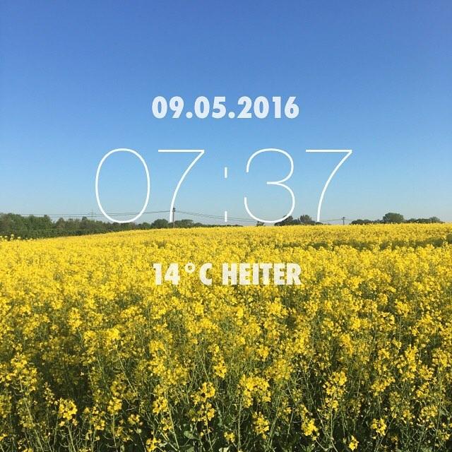 Schöner Montag ;) #wetter #frühling #Sommer #Sonne #raps #blauerhimmel #keinewolken #aufdemwegindenladen