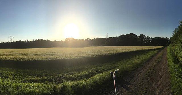 Sonntagabendspaziergang #Sonntag #Spaziergang #derspeckmussweg #schöneswetter #instaweather