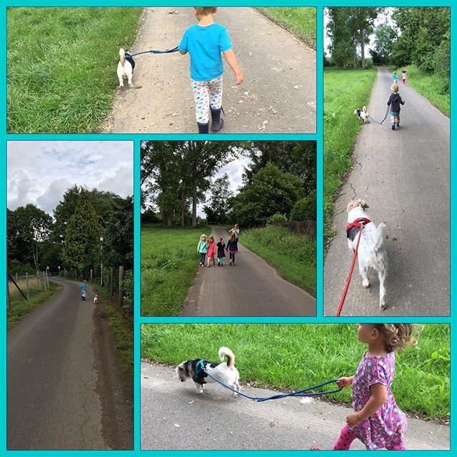 Spaziergang mit Kindergartenkindern ️ #Luca #Rosie #gassi #spaziergang #kindergarten #maren @mmaery