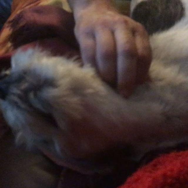 Werbepause ^^ #rosie #grosseherrchenliebe #maennerhund #werbepause #instadogs #video #instavideo #dogsofinstagram #dogstagram
