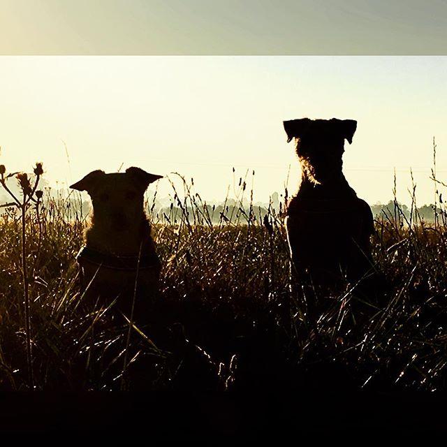 Guten Morgen Fronkraisch ;) #urlaub #frankreich #gassi #luca #rosie #silhouetten #gegenlicht