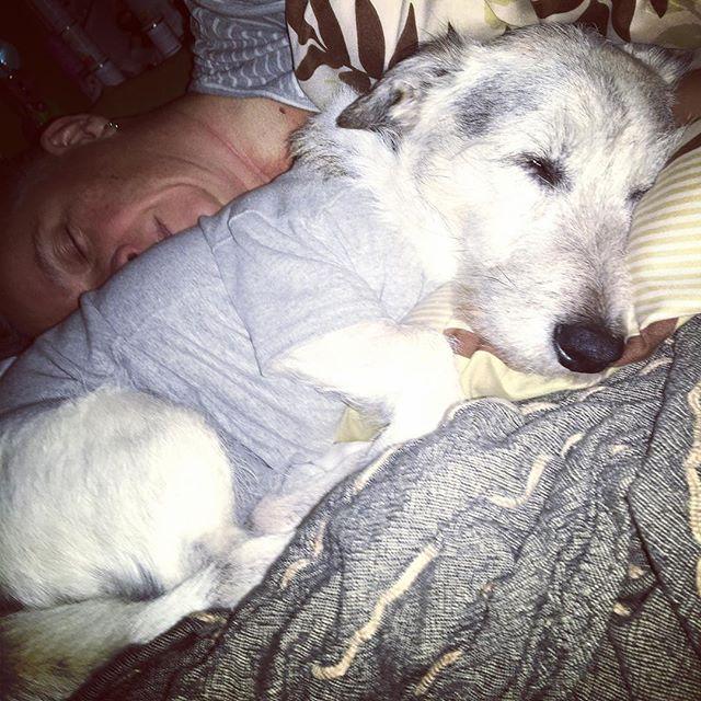 Bettschläfer ️ #latergram #letztewoche #lastweek #kastriert #imbody #babybaer #herzhund #instadogs #terrierlove
