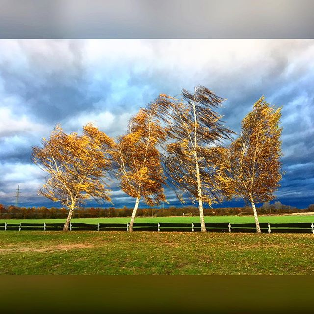 Stürmisch heute #Herbst #2016 #stürmisch #wind #nochkeinregen #aufdemwegindenladen