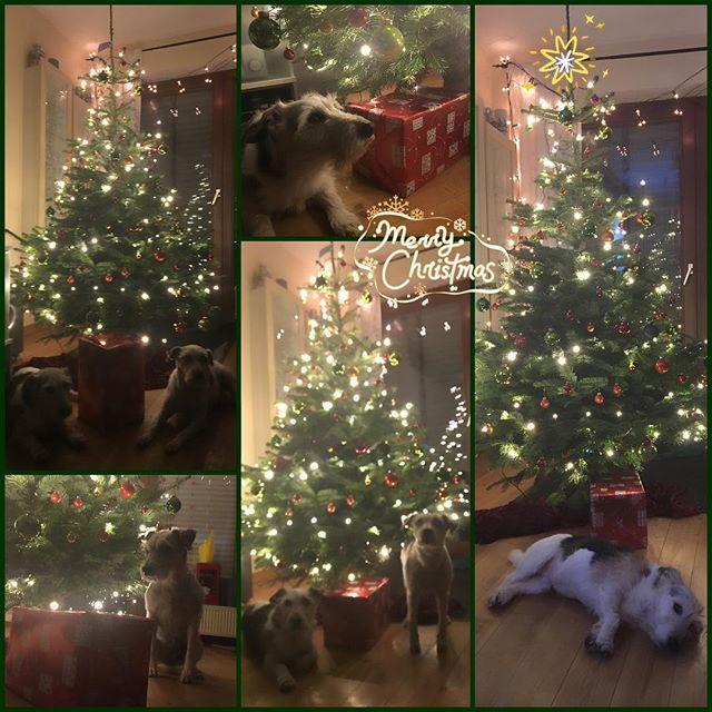 Weihnachtsbaum 2.0 #2016 #weihnachtsbaum #weihnachten #fröhlichefeiertage #miristnochNIEVORweihnachtenderbaumeingegangen #nurkeinepanik #schatziregeltdas #meinheld