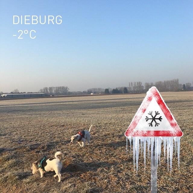Kalt mit Sonne #wetter #dieburg #februar2017 #aufdemwegindenladen