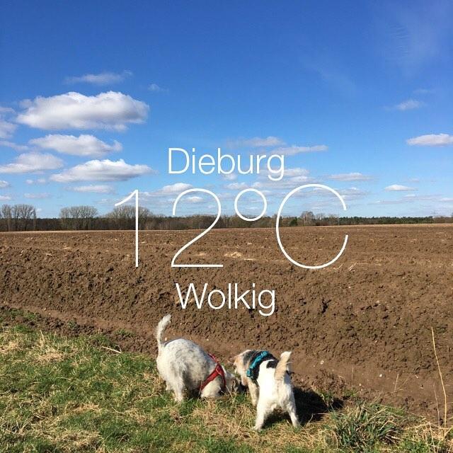 Frühling, Frühling wird es nun bald ... *singsumm* #wetter #dieburg #frühling #spring #gutelaunewetter