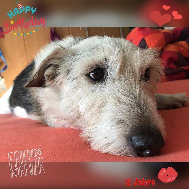 12 Jahre Schnuppibär ️ #Luca #Geburtstag #12jahre #russellmix #jackrussell #terriergram #dogstagram #birthday #dog #birthsdaydog #habdichlieb